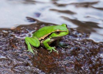 David_Paul_Frog